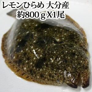 レモンひらめ 800g 大分県産 ( 平目 ヒラメ 養殖 フルーツ魚 レモン 刺身 )