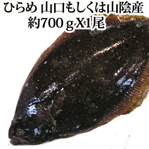 天然 ヒラメ 700g 山口県周防大島産 もしくは 山陰産 ( 平目 ひらめ 刺身 )