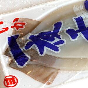 いか一夜干し(冷凍)Mサイズ2枚入り レシピ 付き(イカ干物いか烏賊真いか)