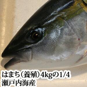 はまち 4kgの4分の1( ハマチ )(瀬戸内海産 養殖)