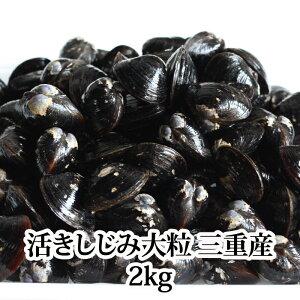 しじみ大粒2kg活き三重産もしくは宍道湖シジミ蜆