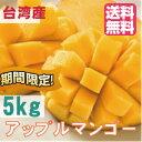 255位:アップルマンゴー 台湾産 5kg【期間限定・送料無料】