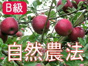 【B級品】竹嶋有機農園の自然農法りんご紅玉 <約4.5kg>※ワケあり・傷あり 家庭用※4月下旬頃まで発送予定/※4月以降は「冷蔵便」配送となります