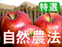【12/3以降発送予定】【特選品】竹嶋有機農園の自然農法りんごふじ <5kg>