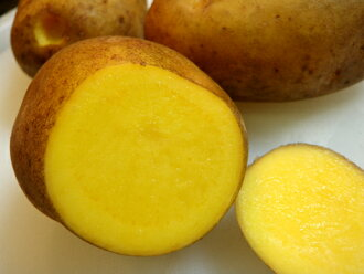 Approximately 500 g of golden potatoes (waking of the Incaic civilization) of organic farming Matano