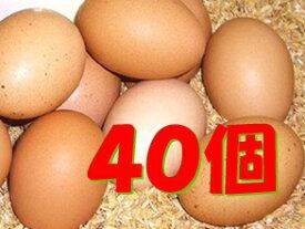 【常温便送料込/一部地域別途】太陽食品の平飼い有精卵★「たいようの幸せたまご」40個※運動たっぷりの平飼い鶏から生まれた元気な卵です!※常温配送(6〜9月は冷蔵配送)