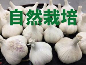 【青森県産】谷地村さんの自然栽培にんにく 1袋(9〜14個前後 ※約500g)※無農薬・無施肥※常温配送※「有機JAS認証」も取得しています。