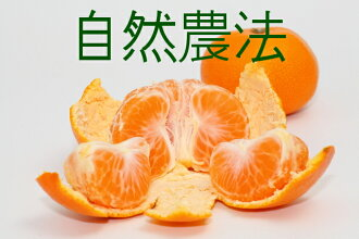 Approximately 10 kg of Qingdao mandarin oranges of H29 Yamashita  ※Size mixture