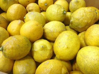 Approximately 2 kg of lemons (domestic production) of organic farming Izumi  ※'not quite perfect' product (skin has many a wound, a stain, irregularities)