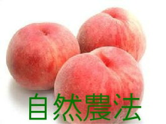 """A miraculous peach of Nakazawa or ※Impossibility designated on ★ delivery date with """"2 kg of boxes"""" ※Chemical pesticide, artificial manure nonuse"""