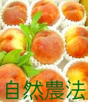 ★The last receptionist! Please forgive it on the occasion of a sellout. Miraculous peach of Nakazawa or approximately 5 kg of ★ delivery date indication: From the beginning of September to the middle (designated impossibility) ※Chemical pesticide, artifi