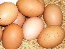 太陽食品の有精卵10個※放飼い・平飼い有精卵