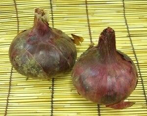 【西日本産】有機、または自然農法 赤玉ねぎ 約300g