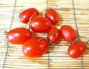 【西日本産(四国地方産)】有機栽培、または自然農法ミニトマト(ハッピートマト) 約150g