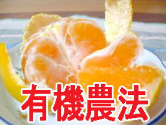 1 kg of natural agricultural methods (organic JAS authorization) premature delivery mandarin orange (organic fruit) of Matsuura