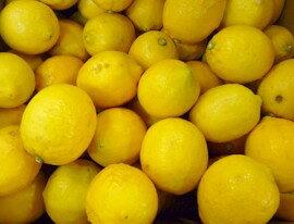 【★3/26以降発送予定】★自然農法【小田原産】レモン 約5kg※サイズ混合 ※斑点・シミ等、外見が悪い場合があります(無農薬無施肥)