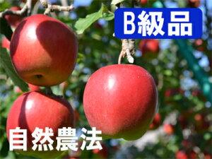 【B級品】竹嶋有機農園の自然農法りんごジョナゴールド <「15kg箱」入り(3段詰め)>※ワケあり・傷あり 家庭用※【常温便送料込・同梱不可】