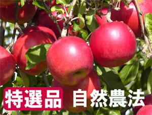 【特選品】竹嶋有機農園の自然農法りんご紅玉 <「4.5kg箱」入り>