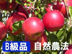 【B級品】竹嶋有機農園の自然農法りんご紅玉 <「4.5kg箱」入り>※ワケあり・傷あり 家庭用