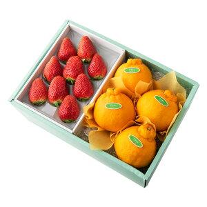 【公式】 新宿高野 アイベリー9&旬果C #29100 ? フルーツ ギフト 果物 内祝い 内祝 フルーツギフト 引越し内祝い 新築内祝い 開店内祝い お見舞い 盛り合わせ フルーツ詰め合わせ 詰め合わせ