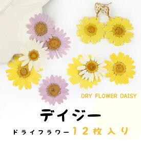 【押し花】選べる3色 デイジー 雛菊 ドライフラワー【メール便対応】レジンクラフト レジン アクセサリー 手作り ハンドメイド