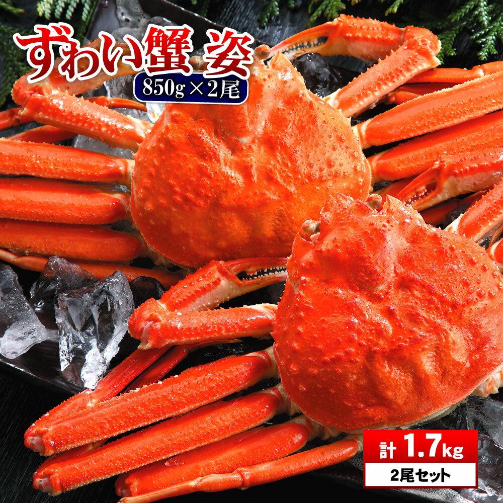 特大 ズワイ蟹 姿850g×2匹 1.7kg ズワイガニ 蟹 セット ずわいがに 年末年始 ズワイ蟹 ズワイ かに お中元 敬老の日 ポイント消化 海鮮 お取り寄せ お歳暮 プレゼント ギフト お歳暮