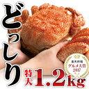 毛蟹 毛ガニ 毛がに 超特大ジャンボ毛蟹 1尾1.2kg 最高ランク カニ 蟹 姿 特大 セット みそ 海鮮 年末 かに kani ギ…