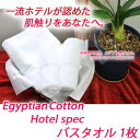 エジプト ホワイト