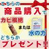 itolier (イトリエ) organic cotton & ボタニカルダイクイックシーツ (D) 140*200cm