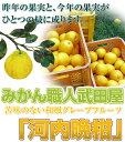 河内晩柑「加工向き」ジュース用10kg【北海道・沖縄は別途1箱500円】