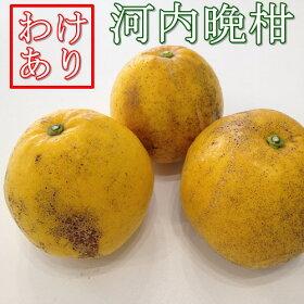【送料無料】愛媛みかん職人「河内晩柑」3L〜S訳あり10kgファミリーギフト果物フルーツ減農薬