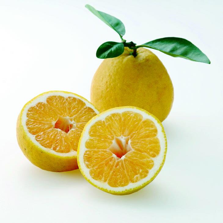 【送料無料】愛媛みかん職人「河内晩柑」3L〜S 訳あり10kgファミリー ギフト 果物 フルーツ 減農薬