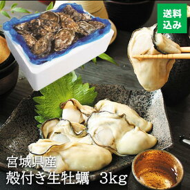 【お徳用】和がき 宮城県産 殻付き 生牡蠣 3kg