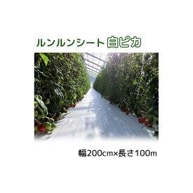 ルンルンシート 白ピカ 幅200cm×100m 光合成促進 遮熱性防草シート 小泉製麻 法人個人選択