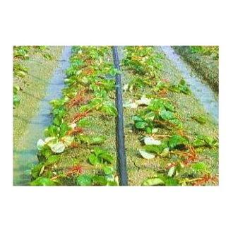 灌水hosusumisansui M 100m*5巻住化農業資材