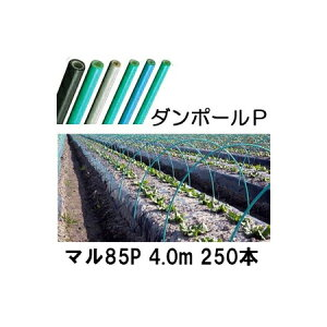 ダンポールP マル85 ×4.0m 緑 トンネル幅180cm 徳用 250本[トンネル支柱 アーチ支柱] 宇部エクシモ