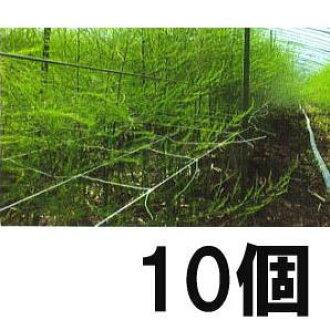 10個蘆笋網路15cm網眼*4個子×長100m白[蘆笋]