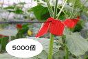 ペリカンキャッチ PC-R500 1ケース(5000個入) 誘引資材 キュウリ等のつる性植物の誘引に 吊り下げ資材 シーム