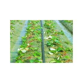 灌水ホース スミサンスイM-03 100m×1巻 住化農業資材