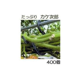 (ケース特価) トマト誘引資材 たっぷり カケ次郎 大容量 400個入 (50個入×8袋) シーム KJR-50[誘引具 カンタン 瀧商店] トマト栽培