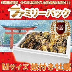 【送料無料】ファミリーパック一粒殻付き牡蠣(M)75個(加熱用)【RCP】02P01Mar15