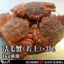 北海道産・活毛蟹(若上)・3尾・合計1kg前後【楽ギフ_のし】【活カニ】【お買い得】