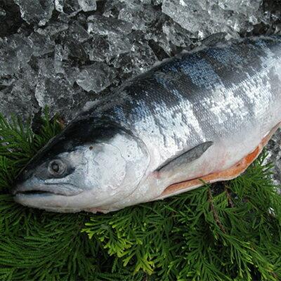 【北海道産】特上秋鮭 一本姿 新巻鮭 3.2kg〜3.4kg前後