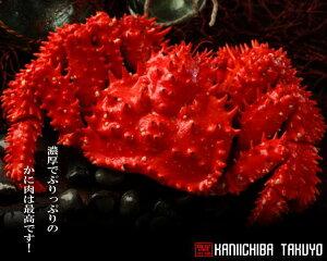 活蟹だから旨さが違う!北海道産活花咲かにオス1尾 600〜700g前後 【楽ギフ_のし】