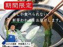 【季節限定商品】石巻十三浜産採ってそのまま生わかめ250g