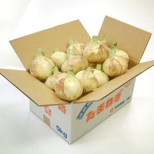 淡路島新玉ねぎ 訳アリ BIGサイズ  5kg箱 (送料無料)