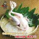 特産地鶏 青森シャモロック 中抜き丸鶏1羽(鶏足(もみじ)つき)【軍鶏 軍鶏鍋 軍鶏肉 ローストチキン 丸鶏 中抜き】…