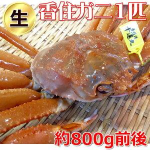 タグ付き 香住がに 約700g 1匹 (生)・(ゆでかに)を選択可能!松葉かにの本場兵庫県香美町より産地直送します。【蟹・かに・カニ・紅ズワイ蟹・通販】