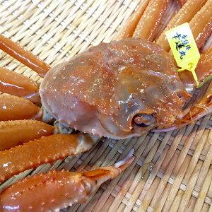 タグ付き 香住がに 約1kg以上 1匹 (生)・(ゆでかに)を選択可能!松葉かにの本場兵庫県香美町より産地直送します。【蟹・かに・カニ・紅ズワイ蟹・通販】
