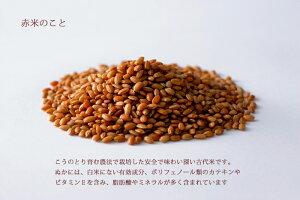 コウノトリ育む農法、無農薬「赤米か紅白米」が選べます